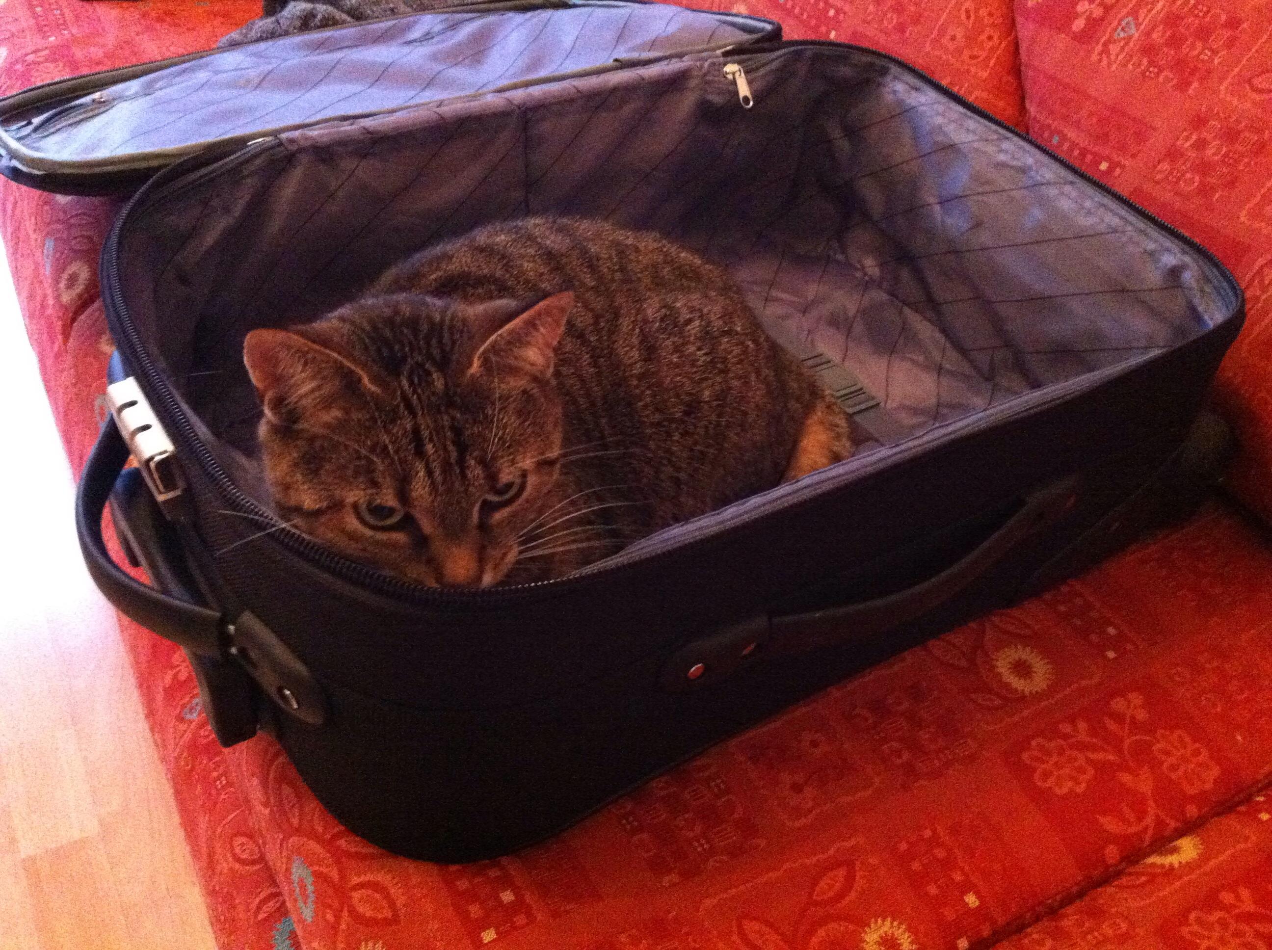 Soso, ein Koffer.