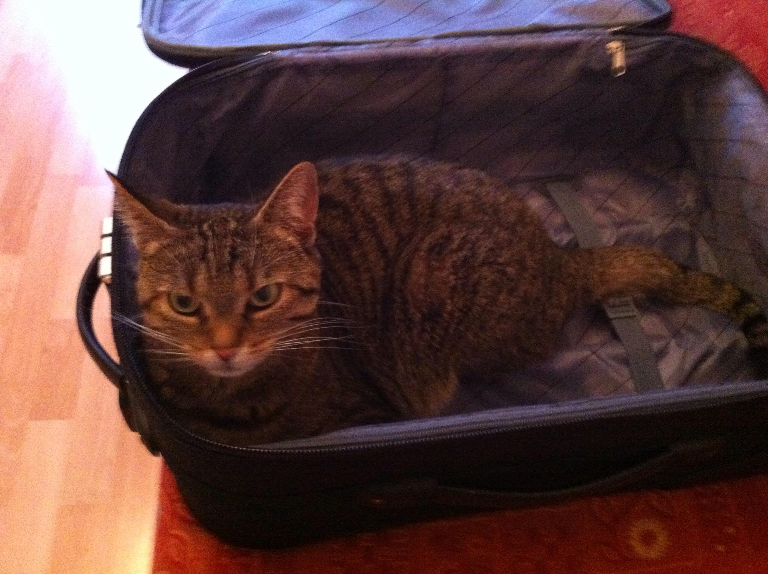 Fertig! Hab dir alles eingepackt, was du brauchst!