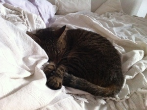 Die kleine Mieze liegt schon im Bett - die Große bloggt noch. ;-)