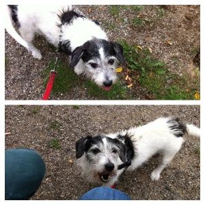 Samstag ist Ehrenamt-Tag: Endlich mal wieder Zeit zum Hundesausführen im Tierheim