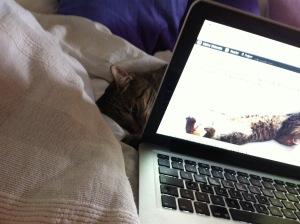 Am Blog basteln - Cindy findet's langweilig